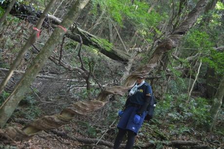 45うねうねの木