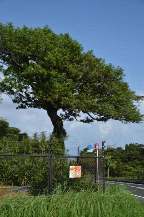 2この木が目印