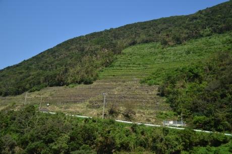 17谷山の段々畑