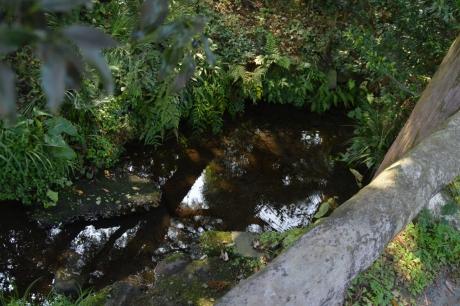 10湧き水の池も