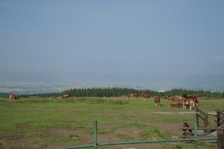 12牛と馬