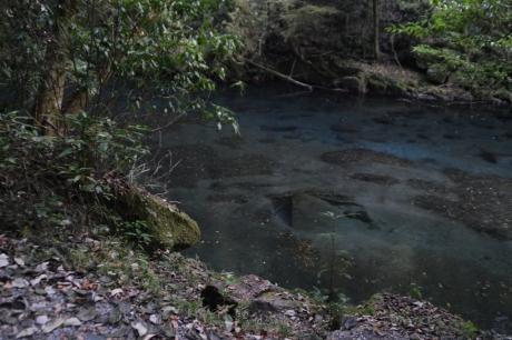 14水が綺麗な菊池渓谷