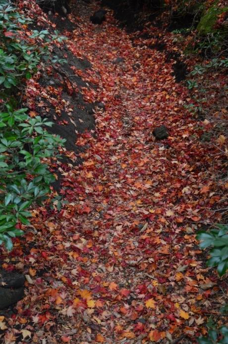 2紅葉の道