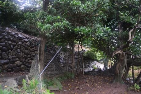 9デカい木と石垣