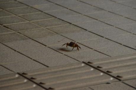 1道の駅に蚊に出没