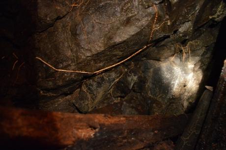 10菌糸のような根のような