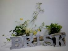 $戸田公園 美容室 BRISK (ブリスク)のブログ-2013-03-25 11.31.41.jpg2013-03-25 11.31.41.jpg