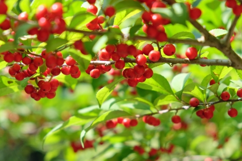 02赤い実