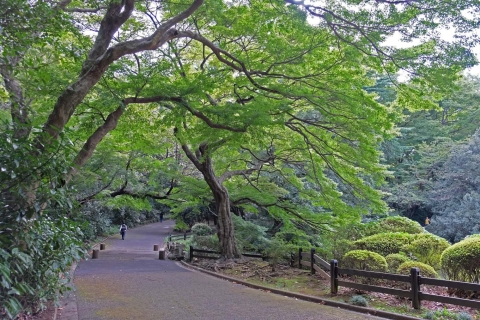 19b新宿御苑