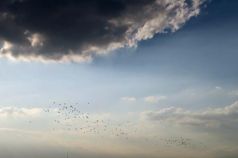 10二子玉ライズ渡り鳥