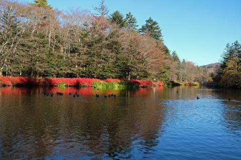 07a雲場池紅葉終了