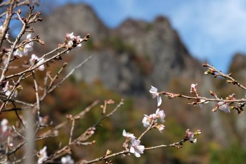 24妙義山十月サクラ