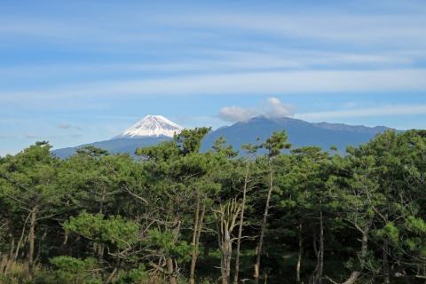06千本松原越しの富士山