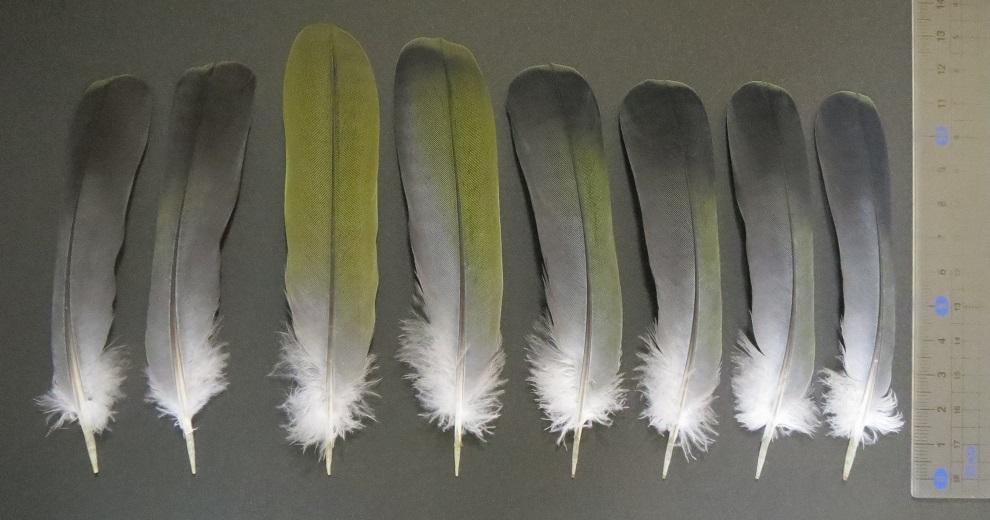 aobato tails