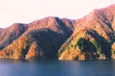 徳山ダム紅葉5