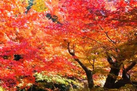 京都東福寺紅葉20153