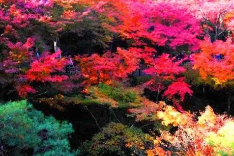 京都東福寺紅葉20154