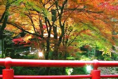 1横蔵寺紅葉 ライトアップ