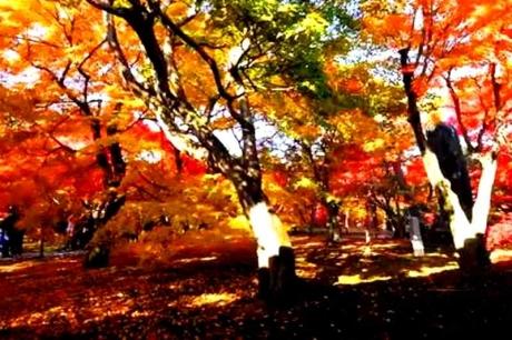 京都東福寺紅葉20152