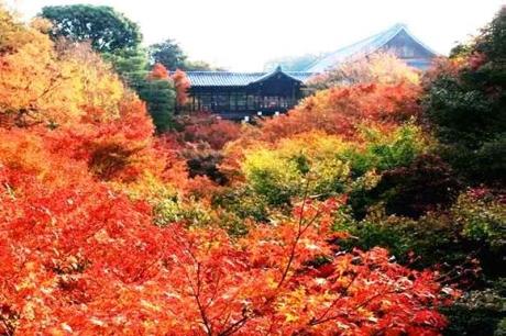 京都東福寺紅葉20151