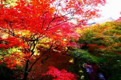 京都東福寺紅葉20156