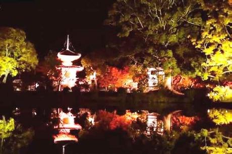 大覚寺ライトアップ5