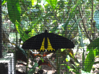 butterflypark9.jpg