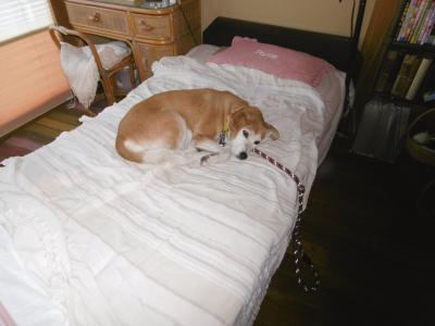 ベッド2ぽぽ