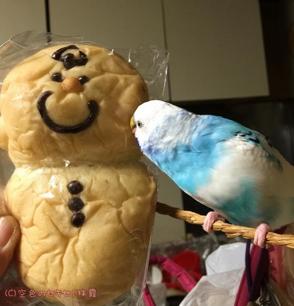 ピーナッツベーカリーのパンとご対面の珠霞   空色のセキセイ珠霞