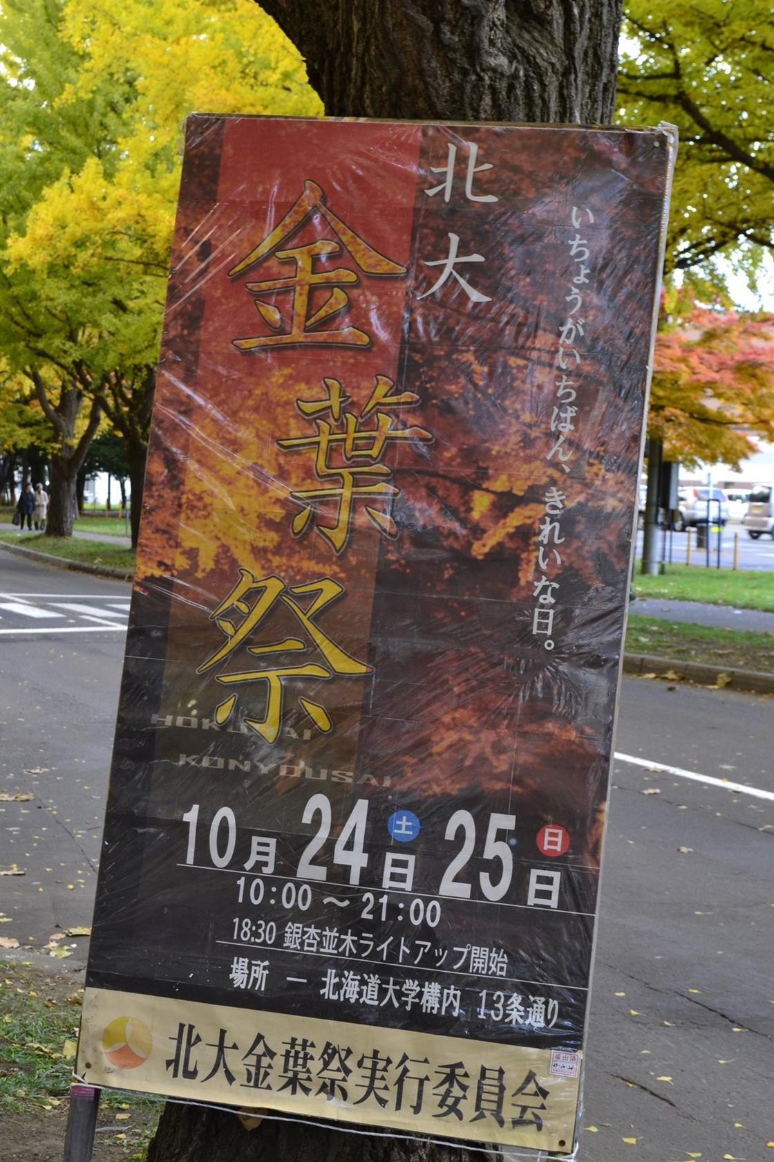 2015北大銀杏並木ライトUP (1)_R