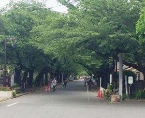 谷中霊園1