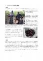 【最終版】カフェ・モサンビコ・プロジェクト事業報告書2