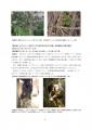 【最終版】カフェ・モサンビコ・プロジェクト事業報告書8