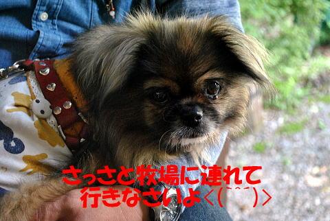 CDSC_5733-1.jpg