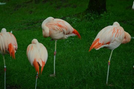 20150819旭山動物園3