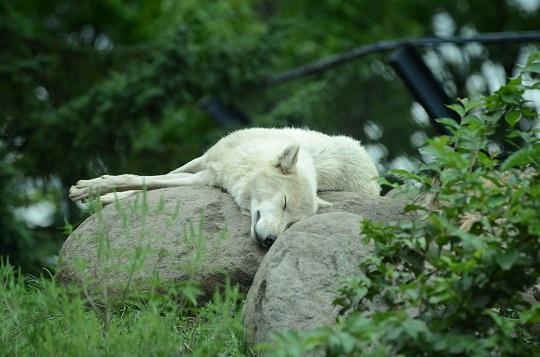 20150819旭山動物園12