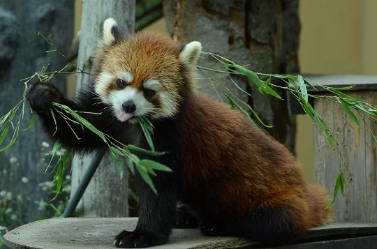 20150819旭山動物園10