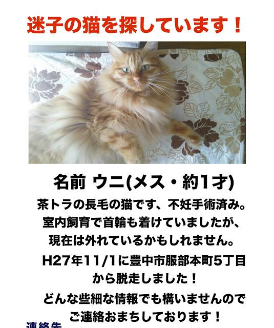 ウニちゃん 服部本町5丁目迷子猫