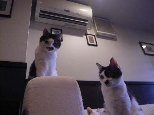 モアニとレア