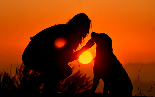 dog-sunset.jpg