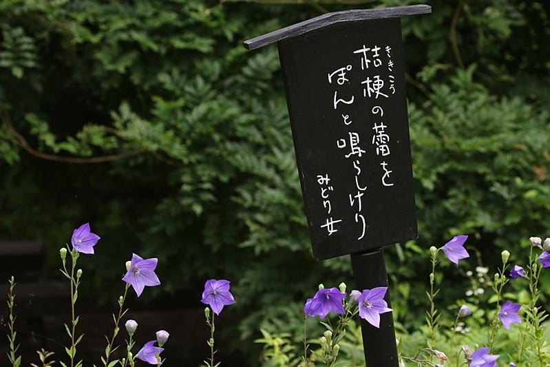 kikyo2712.jpg