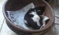 動物-猫親子-蒲田のホテル-20150815-78