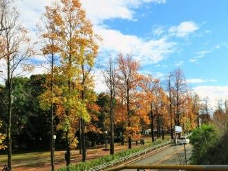 15-11-15 並木