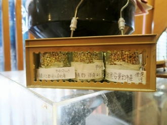 15-11-27 蕎麦の実