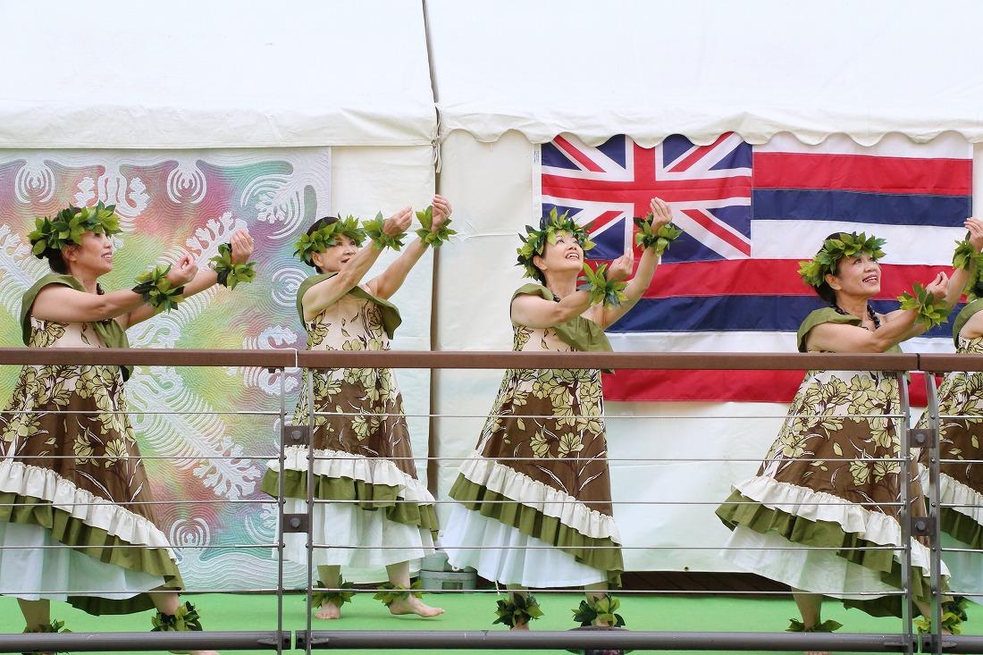 hula 40