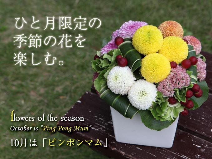 9月 花 誕生花 プレゼント 季節