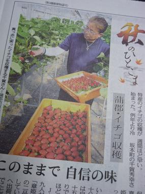 中日新聞 東三河版 イチゴ 農家 花夢