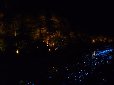 香嵐渓 紅葉 ライトアップ 人気 花夢