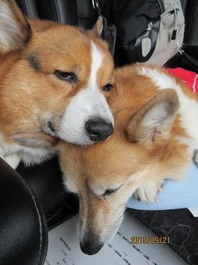 仲良く寝る