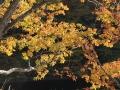 h27onogawako-aokiguti1-kouyou-web600.jpg